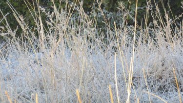 Melbourne woke to frost today, the coldest July morning in 18 years.