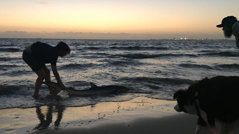 Stunned Sophie Hunt called her friend to help her pull the shark back into the ocean.
