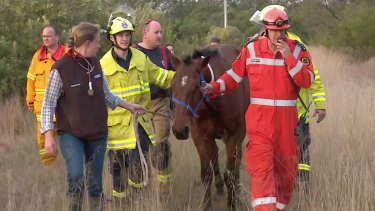 Buddy is led to safety by the SES, firefighters and a vet.