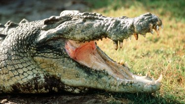 Indonesia plans an island prison with crocodile guards.