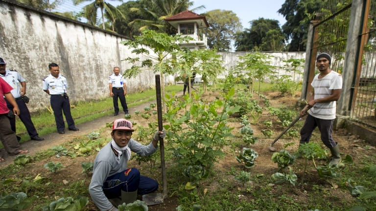 IDEP believes the Bangli prison organic garden is a world-first for prison rehabilitation programs.