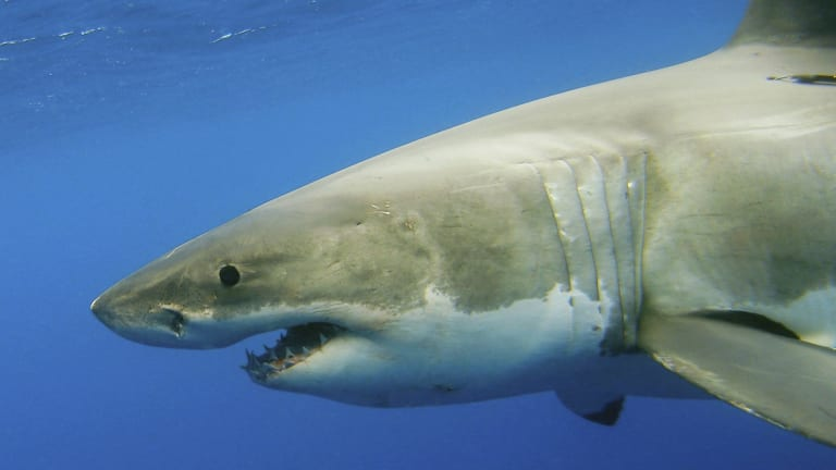 Shark protection technologies have been shortlisted for trials in NSW