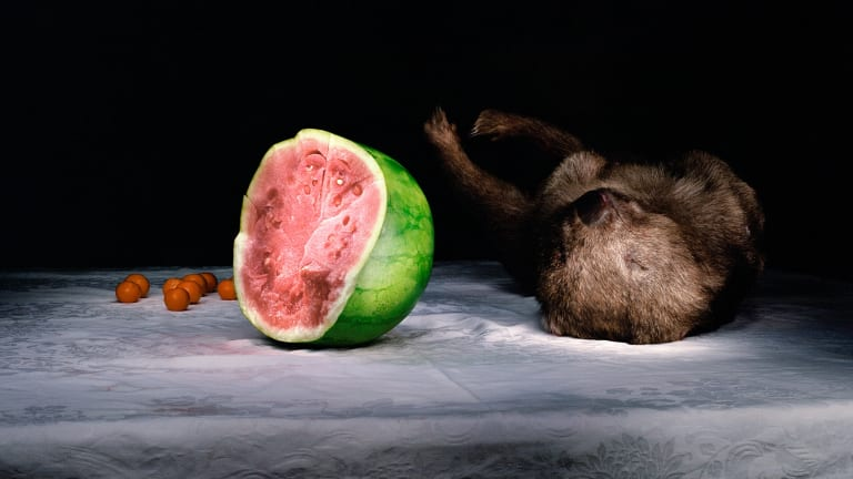 <i>Wombat and Watermelon</i>,  2005 (detail).