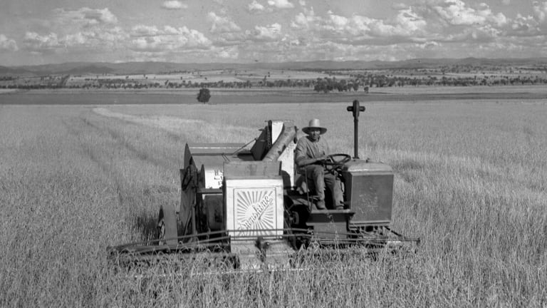 A Sunshine harvester at work in the wheat fields near Tamworth in 1933.
