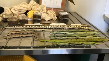 The parcel from northern Europe which arrived in Melbourne on March 14 contained live reptiles and?spiders.