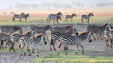 Forget unicorns, we need zebras, says Jock Fairweather.