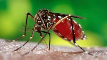 Hawaii is suffering its largest outbreak of dengue in 60 years, said physician Harold Margolis.