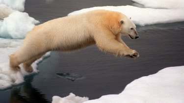 Protectection: Polar bears