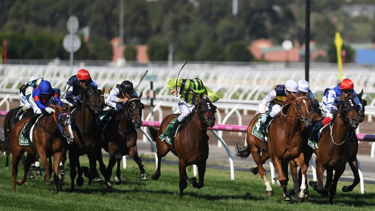 Single Gaze, far left, finished fifth in the Australian Cup, meaning she'll avoid taking on Winx.