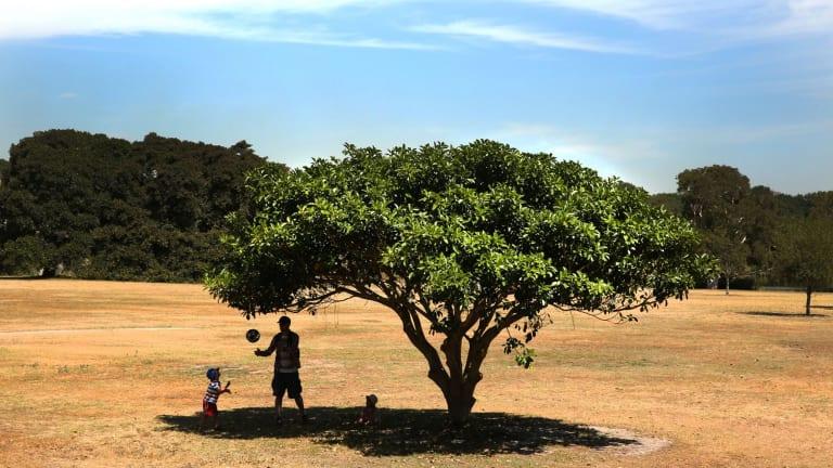 African plain or Centennial Park? Early summer heat bakes Sydney.