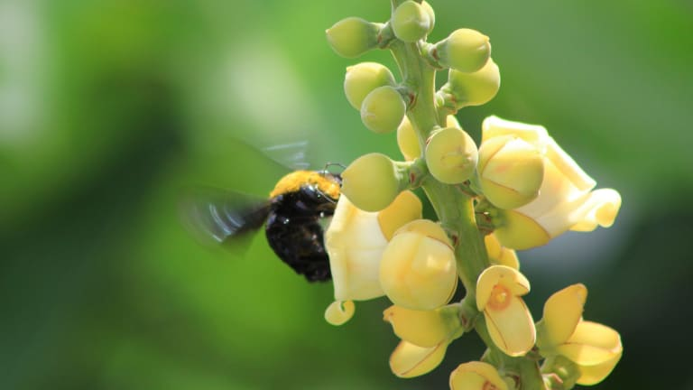 Pollinators are integral to human well-being in more ways than one.
