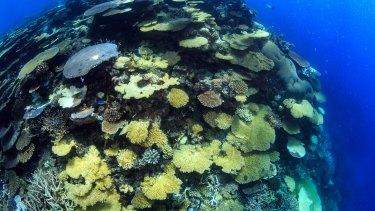 Healthy Rib Reef, near Townsville.