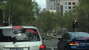 A fallen tree blocks King Street in Melbourne on Sunday.