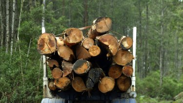 VicForrests is now in charge of all logging west of the Hume highway in Victoria.