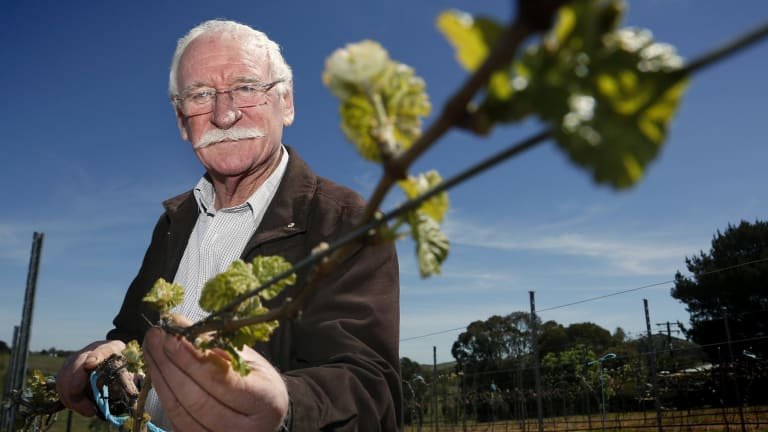 "Winemaker Ken Helm says 2015 is ""the vintage of a lifetime""."