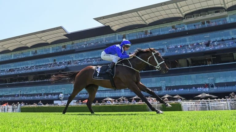 Winx flashes past the Randwick grandstand.