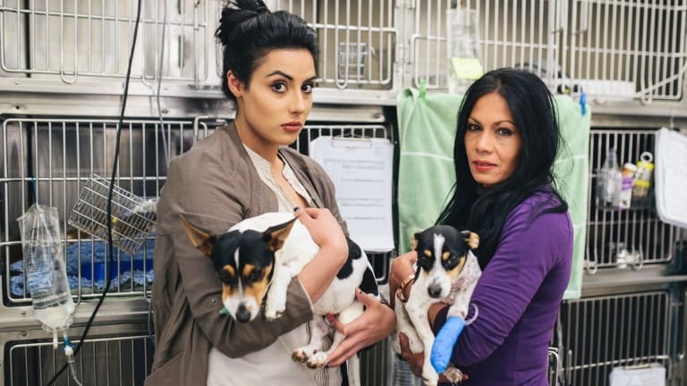 Vanessa Giannasca and her mother Rachael Ali visit their dogs 'Lucky' and 'Lady' at Calwell Vet after they were mauled by three dogs earlier this week.