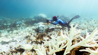 Coral bleaching off Port Douglas earlier this year.