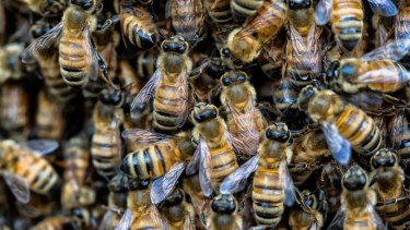Police and Worksafe investigators were called in after the bee sting fatality.