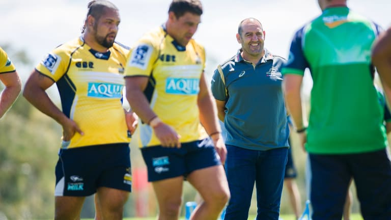 Michael Cheika is still looking for a replacement for departed Wallabies scrum guru Mario Ledesma.