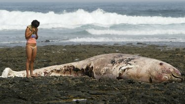 Too late: A dead Cuvier's beaked whale on the Canary Islands.