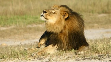 Killed by dentist: Cecil the lion.