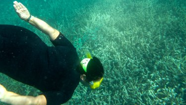 Coral bleaching at the Great Barrier Reef.