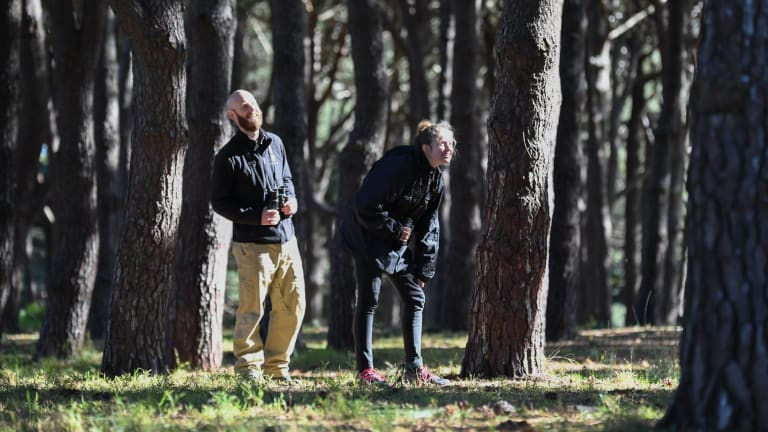 Wildlife ecologist John Martin and researcher Jessica Rooke look for yellow-tailed black cockatoos in  Sydney's Centennial Park.