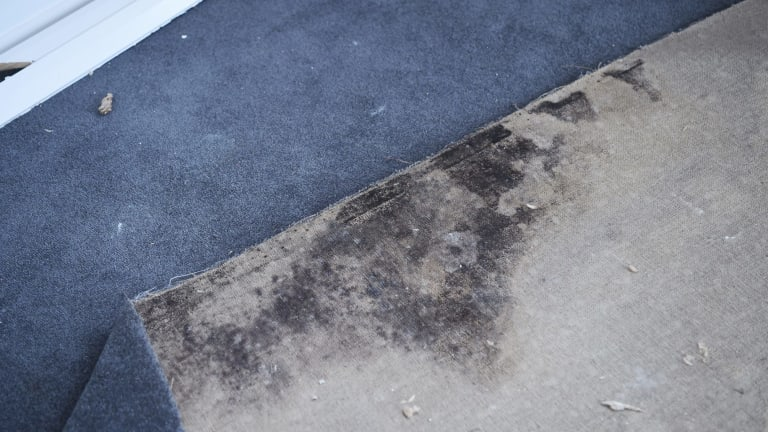 Mould under the carpet in a northern beaches home.