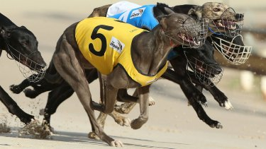 Premier Mike Baird has announced the end of greyhound racing in NSW from July 1, 2017.
