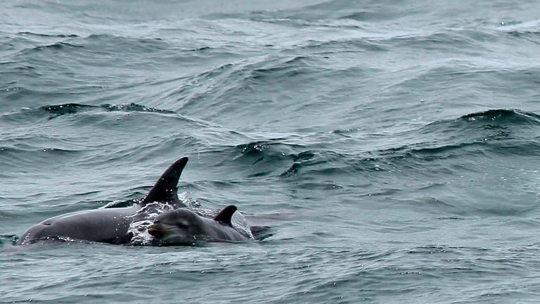 Four dolphins and two seals have died in the nets of the Geelong Star.