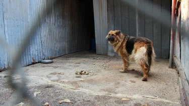 Puppy farms will still exist but with a reduced number of dogs.