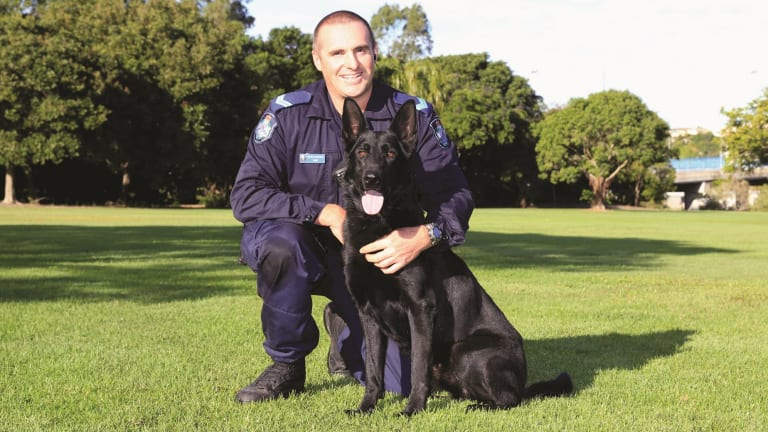Police Dog Ox with handler Senior Constable Ben Miles.