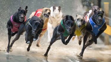 "Tabcorp is predicting a lot of the money currently being bet on the dogs will migrate to ""other wagering product""."