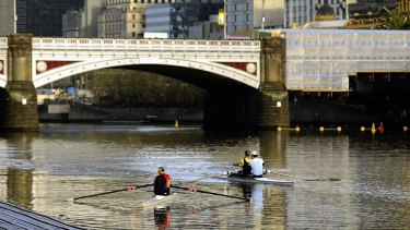 Rowing Victoria says as many as 4000 rowers are on the Yarra during the morning peak.
