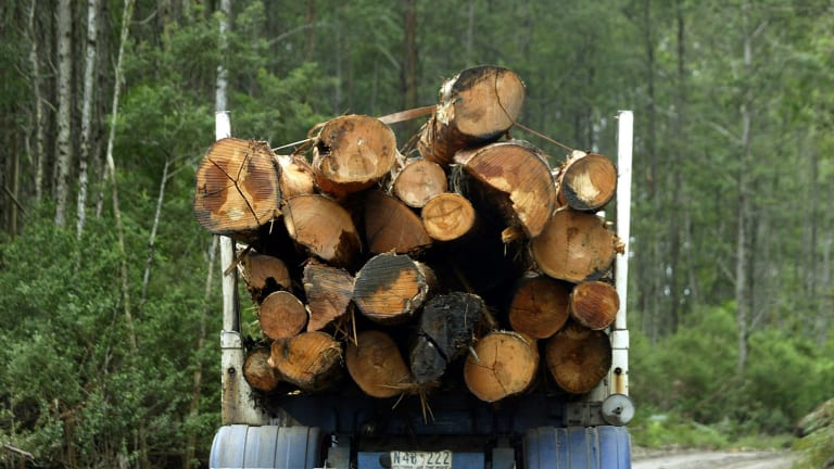 Pillar: CO2 emissions saved from ceasing logging could be turned into revenue under the Abbott government's $2.55 billion emissions reduction fund.