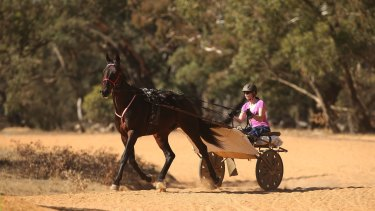 Champion harness racing driver and trainer Kerryn Manning trains her horse Arden Rooney  at her Great Western property.