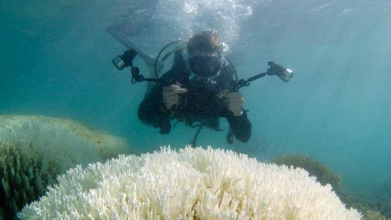 Monitoring the effect of coral bleaching is crucial to determining the best plan of action.