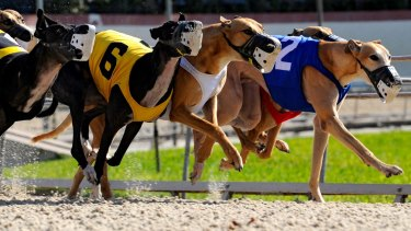 There are some in greyhound racing in NSW who believe a change of government could bring a change of sentiment and a return to the track.