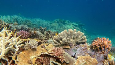 Healthy coral at the southern end of the Great Barrier Reef.