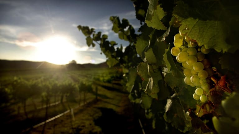 Producer: Australian Vintage's focus is expected to deliver above average earnings growth over the medium-term.