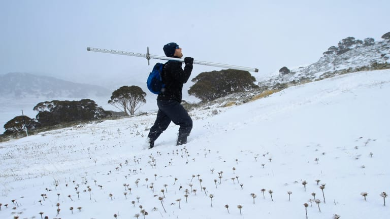 Gerard Rampal, a scientific officer with Snowy Hydro, treks to gauge the snow depth level at Spencers Creek.