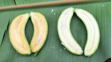 The added pro-vitamin A gives the bananas a golden colour.