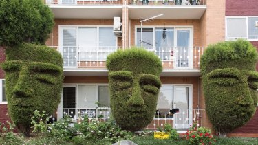 Topiary heads, Hawthorn.