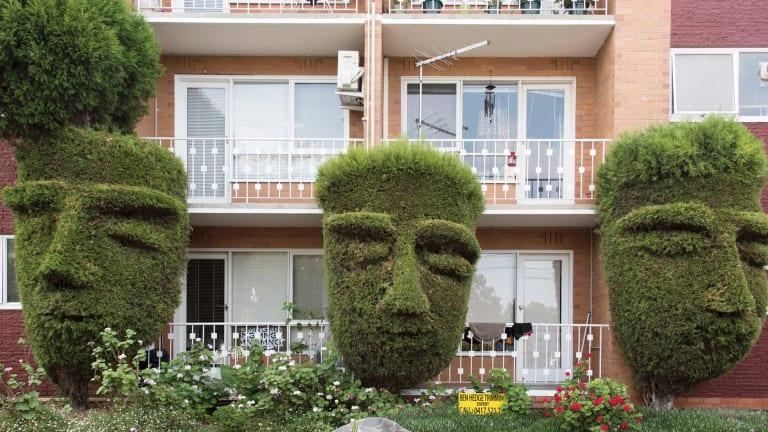 Topiary heads, Hawthorn.