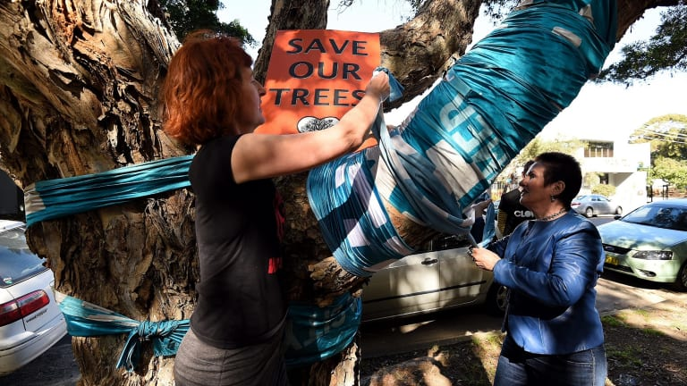 Janet Dandy-Ward (left) from WestConnex Action Group and Sydney lord mayor Clover Moore (right) wrap a blue sash around a  tree at Sydney Park marked for destruction to make way WestConnex.