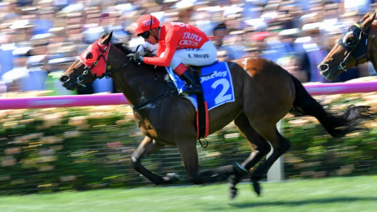 Lightning fast: Redzel will look to continue his winning run at Flemington on Saturday