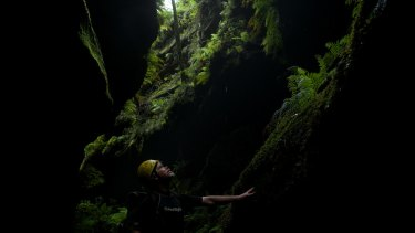 Looking up: David Noble inside the rehabilitated Hat Hill Creek Canyon.