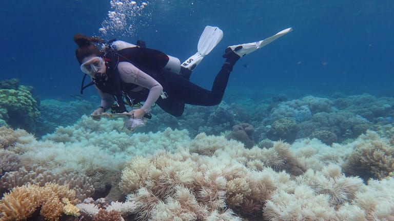 Aerial surveys by the Australian Research Council's Centre of Excellence for Coral Reef Studies has revealed only the southern third of the Great Barrier Reef has escaped unscathed from coral bleaching.