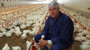 "Matthew Evans inside a ""best-practice"" large-scale chicken farm in"